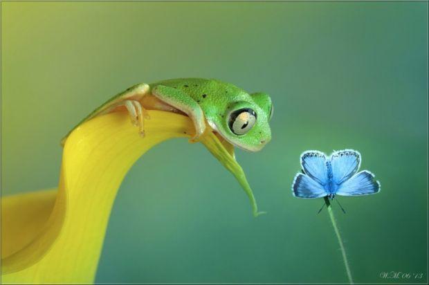 бабочка и лягушка