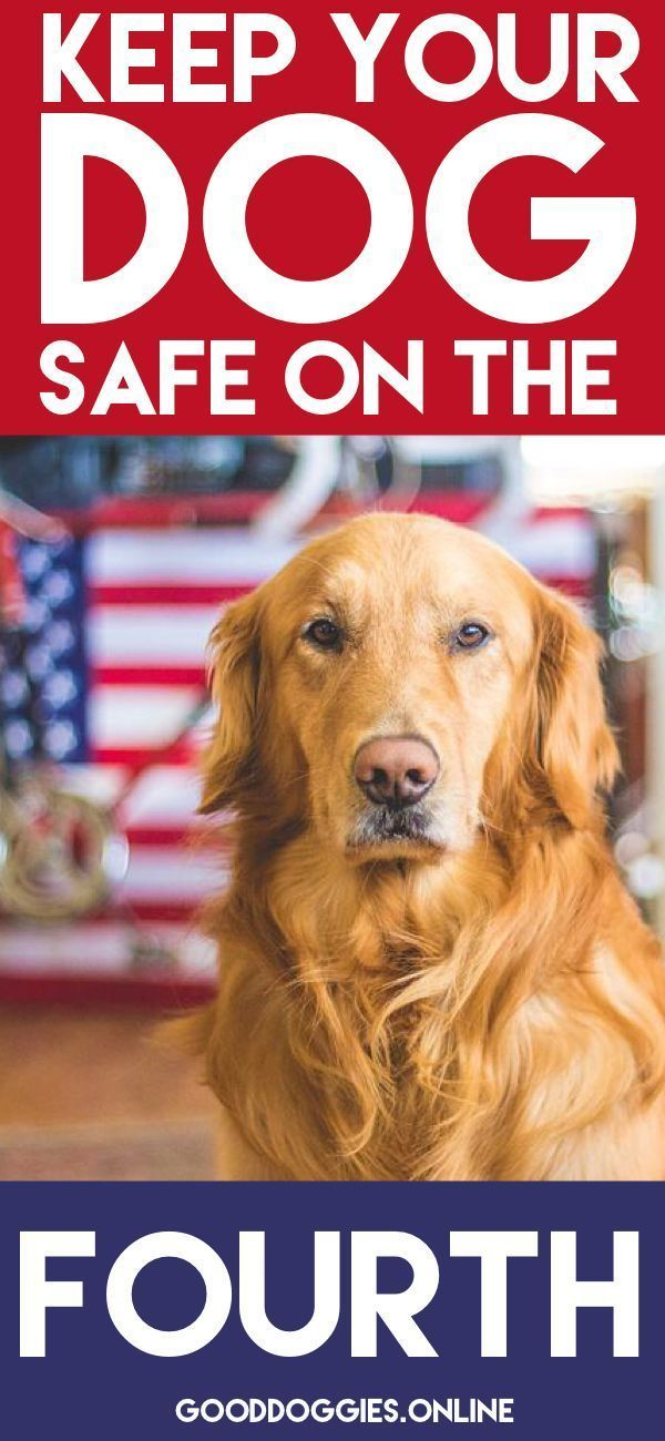 Dogs Fireworks Safety On The 4th Of July Firework Safety