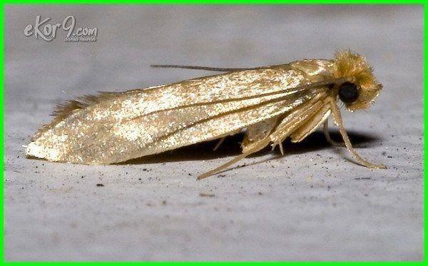 Hati Hati Inilah 8 Jenis Serangga Perusak Pakaian Dunia Fauna Hewan Binatang Tumbuhan Serangga