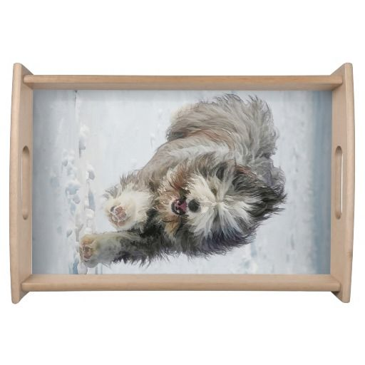 Bearded collie running in the snow. Small Serving Tray  Entertain in style with this customized serving tray! Printed in full color, the serving tray comes in two sizes with a black or natural wood finish.
