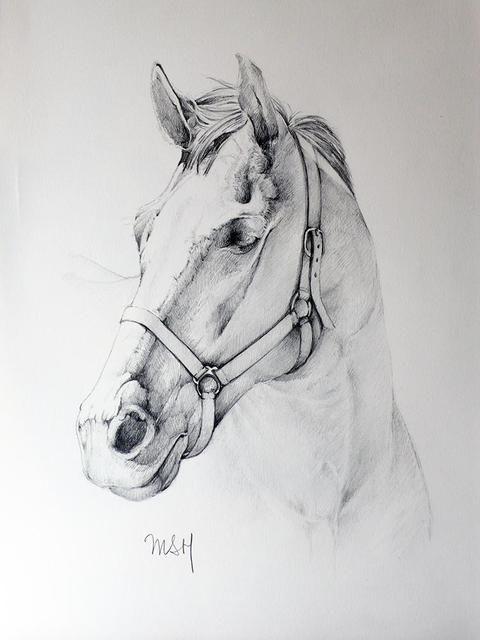 Resultado de imagen para caballo dibujo a lapiz
