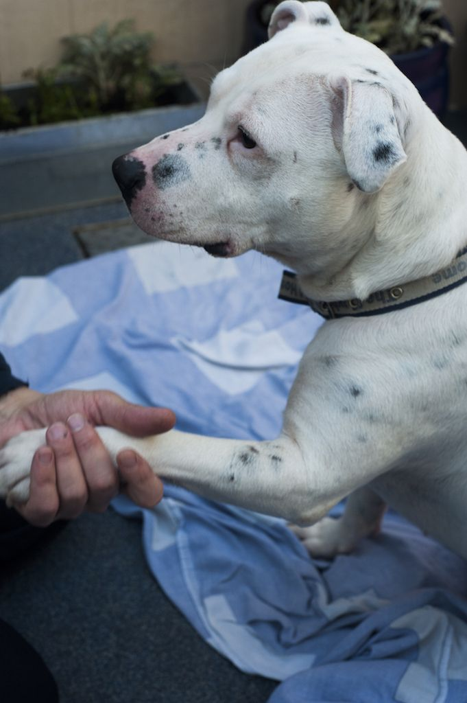 Deaf Dog Learns Sign Language While Waiting For Someone To Love Him