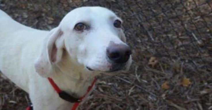 Σκύλος άλλαξε 11 ιδιοκτήτες αλλά ΠΑΝΤΑ επέστρεφε στο Καταφύγιο. Όταν οι Κτηνίατροι Κατάλαβαν ΓΙΑΤΙ το έκανε, έμειναν άφωνοι! Crazynews.gr