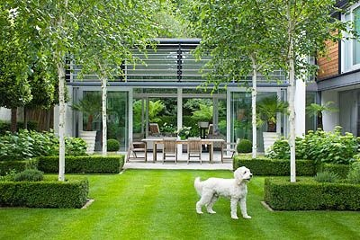 THE GLASS HOUSE, PETERSHAM. ARCHITECTS TERRY FARRELL PARTNERS. GARDEN DESIGN BY SALLIS CHANDLER: LAWN, GLASS PAVILION, BETULA UTILIS JACQUEMONTII AND OUTDOOR DINING TABLE