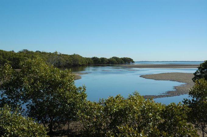 tabbil ban dhagan mangrove boardwalk