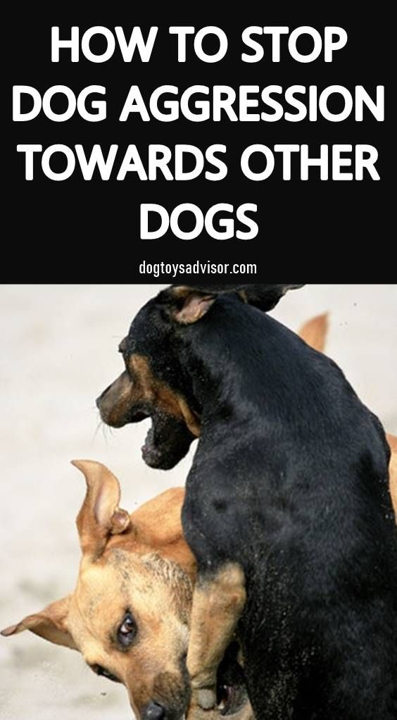 Stop Aggressive Dog Behavior With These Tips