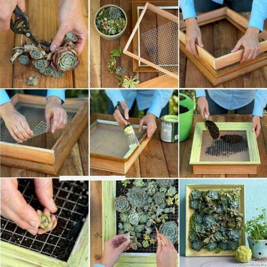 Cómo hacer un cuadro de suculentas: Wall Art, Flower Pictures, Succulent, Mothers Earth, Minis Gardens, Succulents Wall, A Frames, Pictures Frames, Wall Gardens