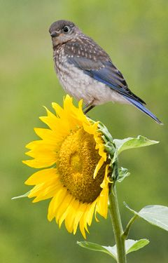 Grow Your Own Birdseed  Use these 10 plants to bring more feathered friends into your backyard.