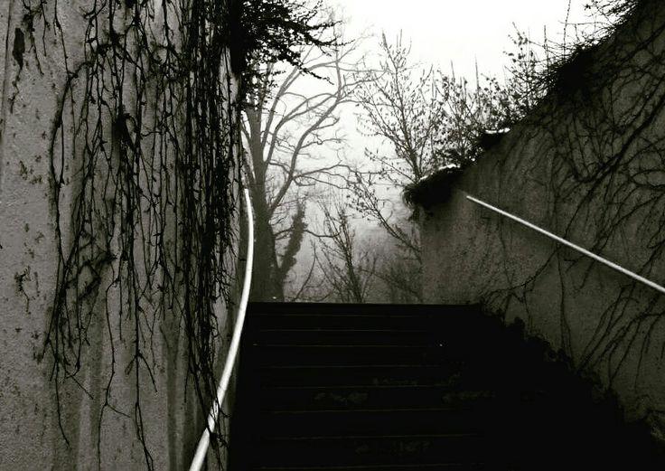 #misty #stairs #mystical #zürich #blackandwhite
