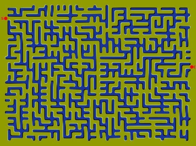 13оптических иллюзий
