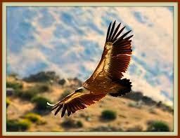 """""""Δράσεις"""" Οικολογία και Περιβάλλον: """"Προστασία του φυσικού περιβάλλοντος""""«Natura 2000»..."""