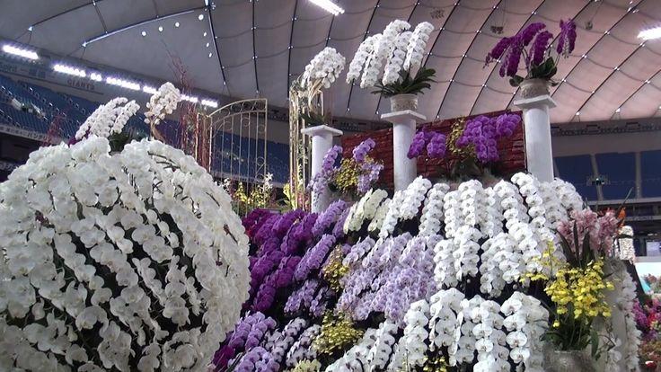 Japan Grand Prix International Orchid Festival 2014 Part1( 世界らん展日本大賞2014)