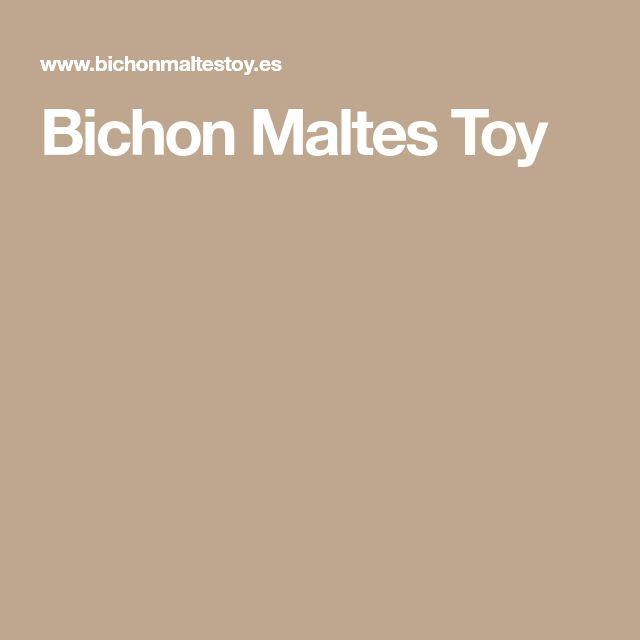 Bichon Maltes Toy