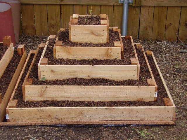 Strawberry pyramid. 5x5; 4x4; 3x3; 2x2; 1x1. New to my garden 2012.