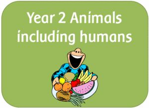 Image result for animals including humans year 2