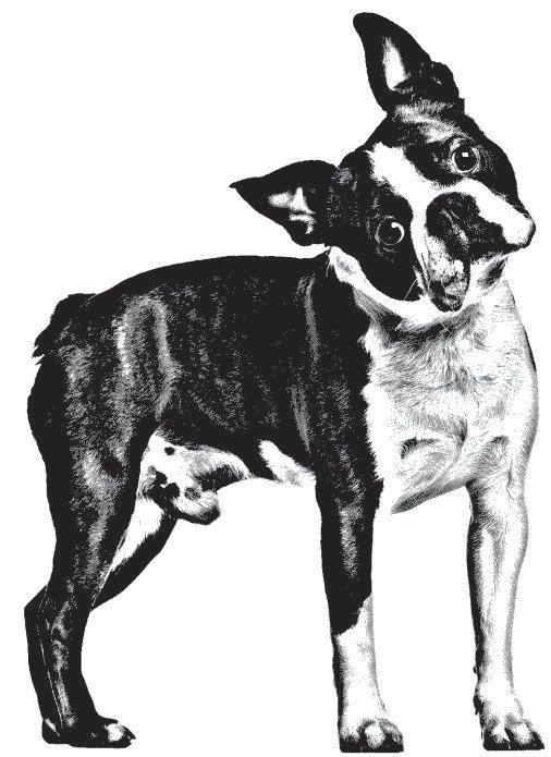 25 best ideas about dibujos blanco y negro on pinterest for Laminas blanco y negro