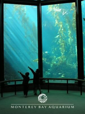 Monterey Bay Aquarium. Remember going here when I was a kid. Would love to go back again some day. Great place to go to with kids.