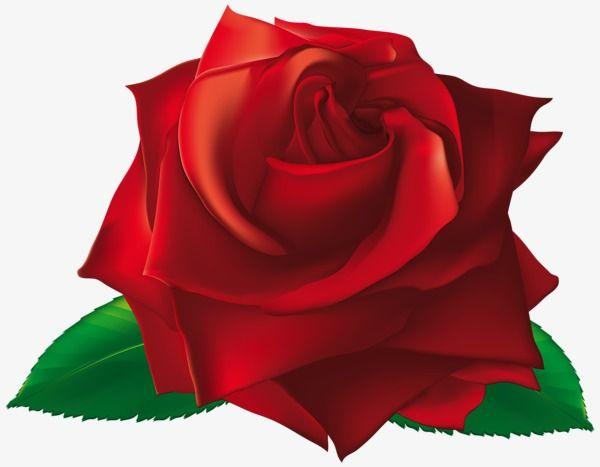 Pintado De Rosa Vermelha Imagens De Rosas Vermelhas Imagens De