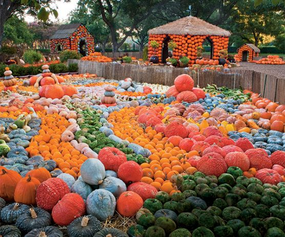 The South's Best Pumpkin Patches