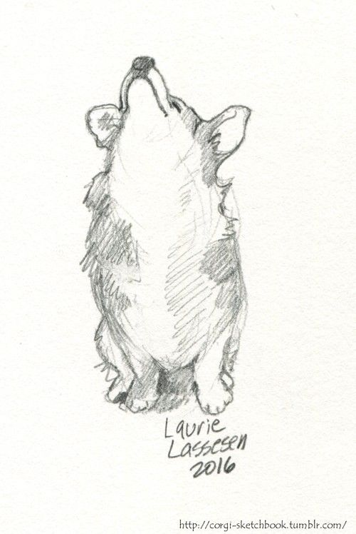corgi sketchbook