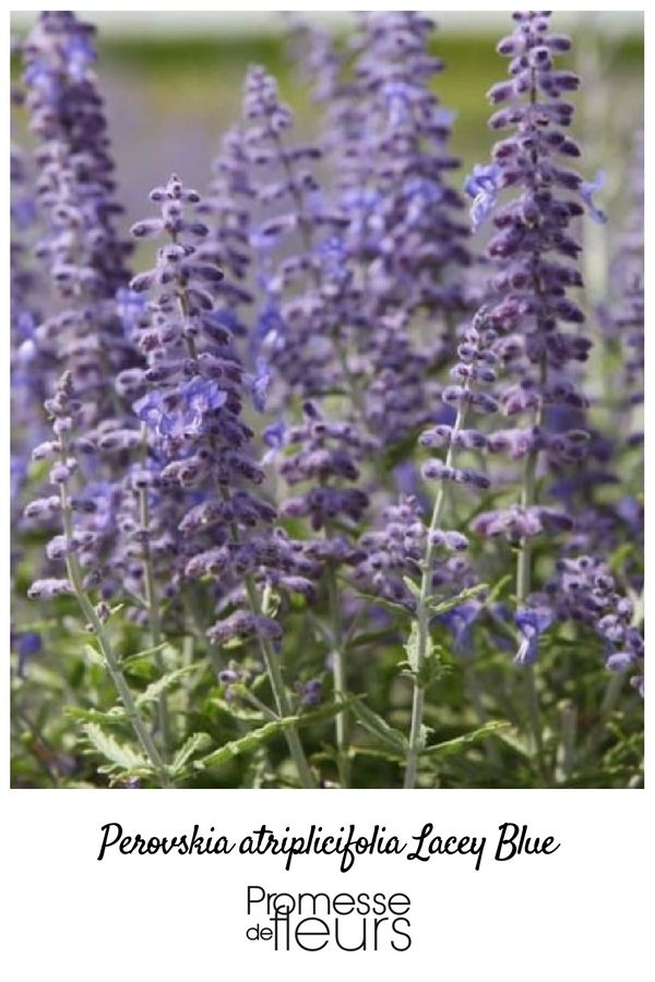 124 best jardin bleu images on pinterest   flowers, gardening and