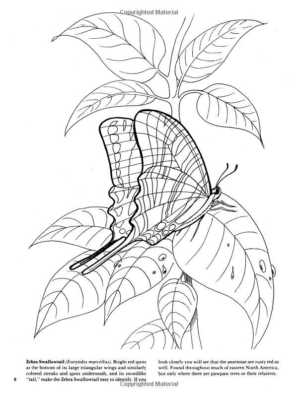 amazonfr butterflies coloring book jan sovak monty reid livres
