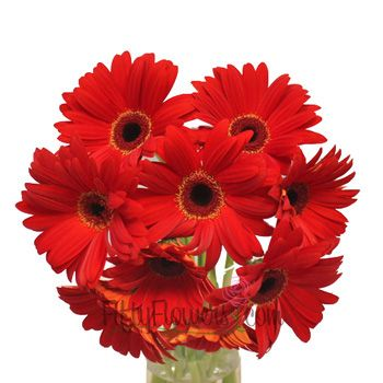 72 besten Gerberas!! Bilder auf Pinterest | Gänseblümchen, Frische ...