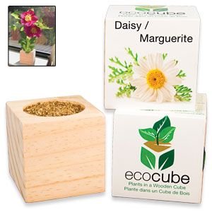 "Ecocube Daisy - Grow beautiful flowers from this eco-friendly wood planter! Already filled with seed and fertilizer, so you just add water and sunshine. Plus, cube can be buried outdoors, giving your plant a permanent home. Starts growing in 6-8 days; starts blooming in 7-8 weeks. 3""Cube. (Product Number SM5476) $9.98 CAD"