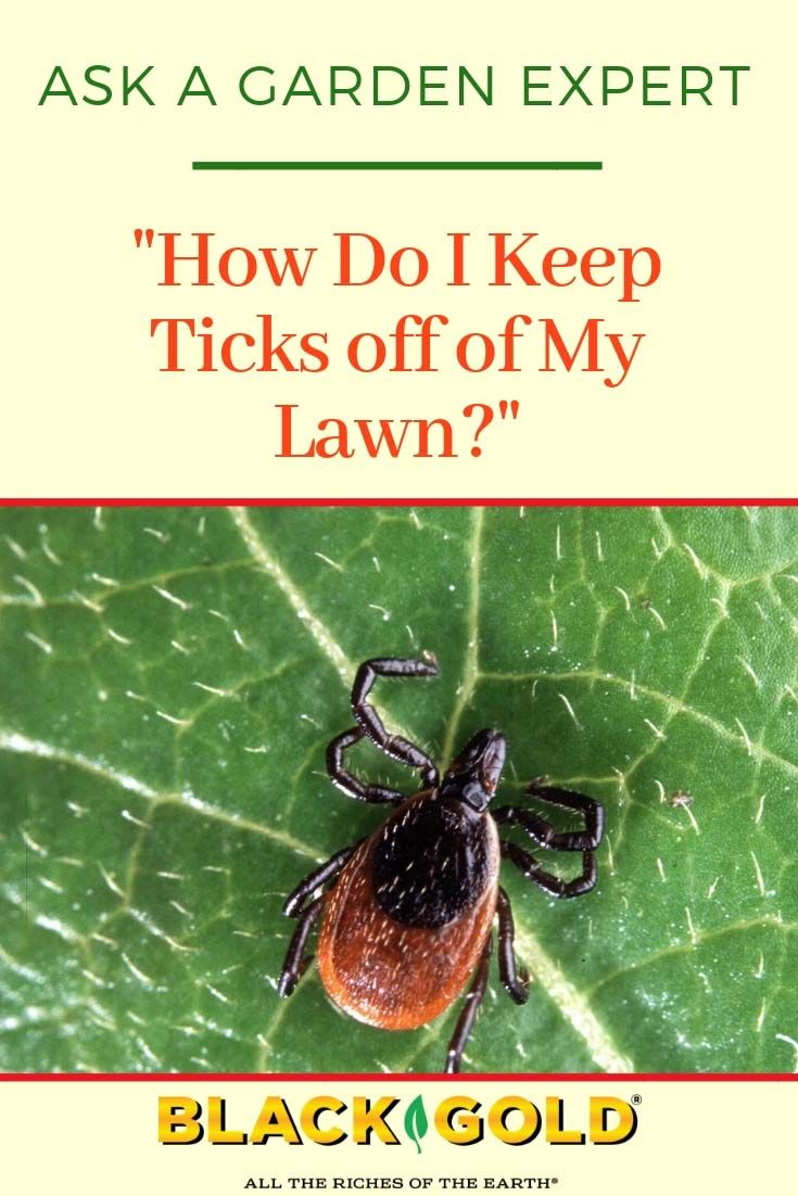 How Do I Keep Ticks Off Of My Lawn Get Rid Of Ticks Natural