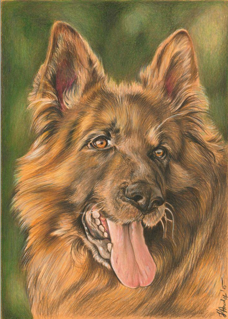 Colored pencils dog portrait drawing