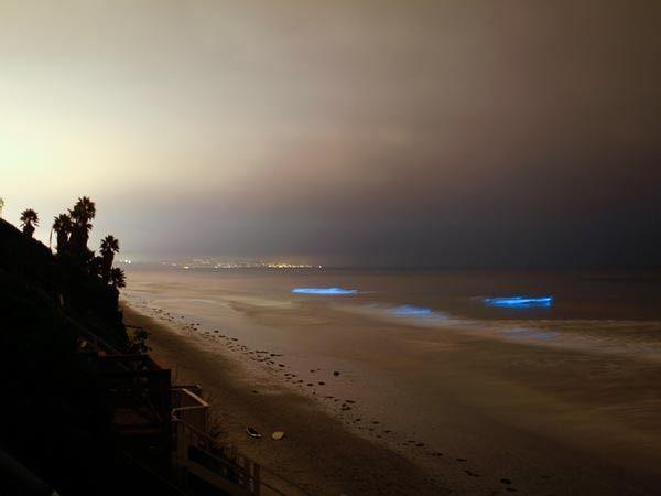 Cuando las condiciones son las adecuadas, las poblaciones de algas pueden estallar a un ritmo tan rápido que su gran número es suficiente para cambiar el color del agua. Generalmente conocidas como marea roja, las franjas de fitoplancton quizás no sean tremendamente bonitas durante el día pero, a la noche, es otra historia. Cuando se agitan, las algas emiten un brillo azul que enciende el océano profundo con una luminiscencia de otro planeta.