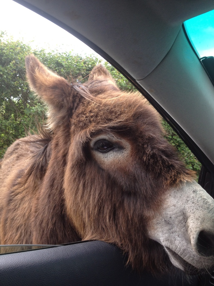 looking for a lift! Daisybank Cottage New Forest