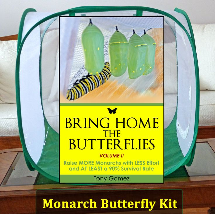 The Butterfly Growing Kit is a monarch butterfly kit that includes a cage for raising butterflies, floral tubes for milkweed stem cuttings, and a digital book about how to raise monarch butterflies indoors. Get the tools and info you need for raising healthy monarch butterflies...
