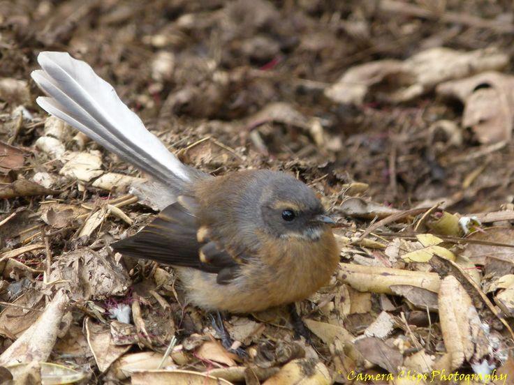 https://flic.kr/s/aHsjGgbg5r | OUR BIRDS | Birds in our garden and around our area