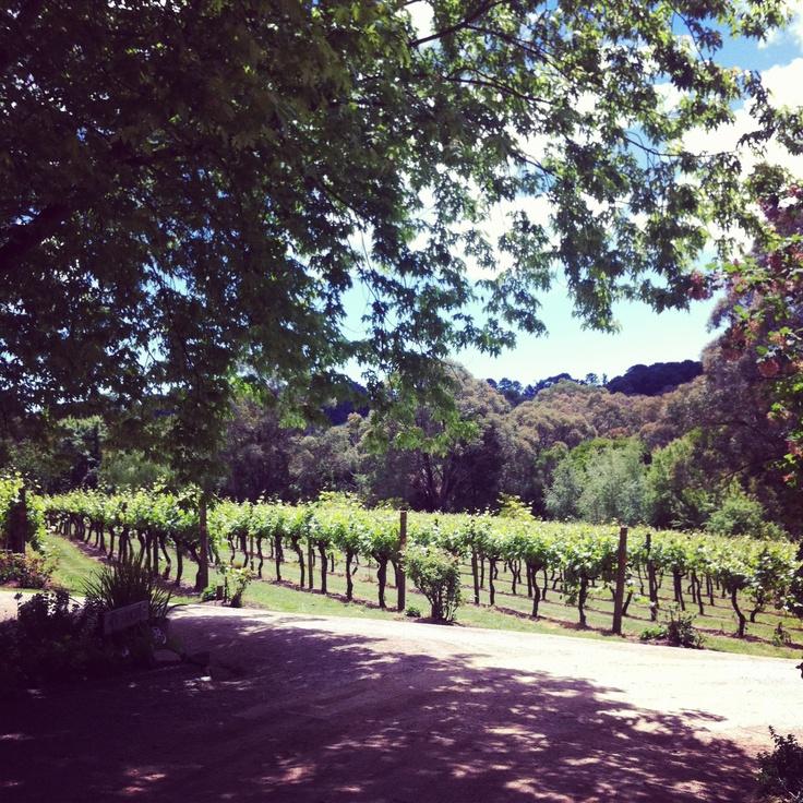 Main Ridge. Best winery ever.