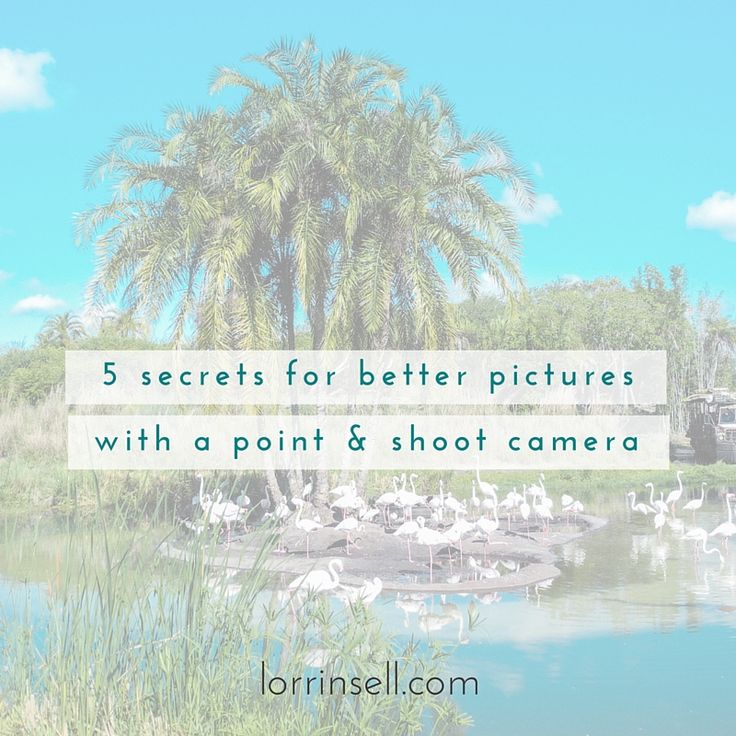 just because you are only using a point and shoot camera doesn't mean you can't get beautiful pictures of your kids!