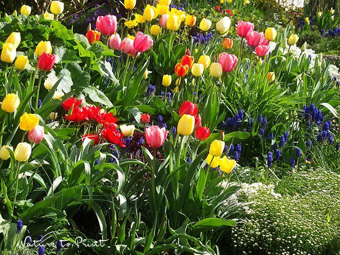 Viel Garten, wenig Geld? 12 Tipps wie Sie Ihren Garten üppig gestalten ohne Pleite zu gehen.