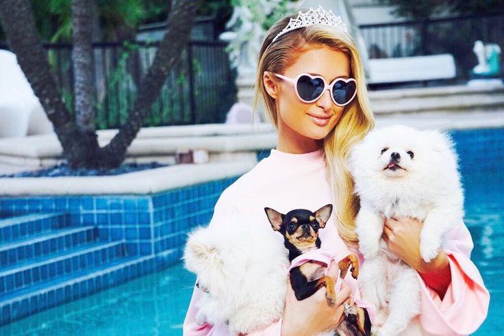 Paris Hilton's Pets Are 'Squad Goals': Pic - Us Weekly