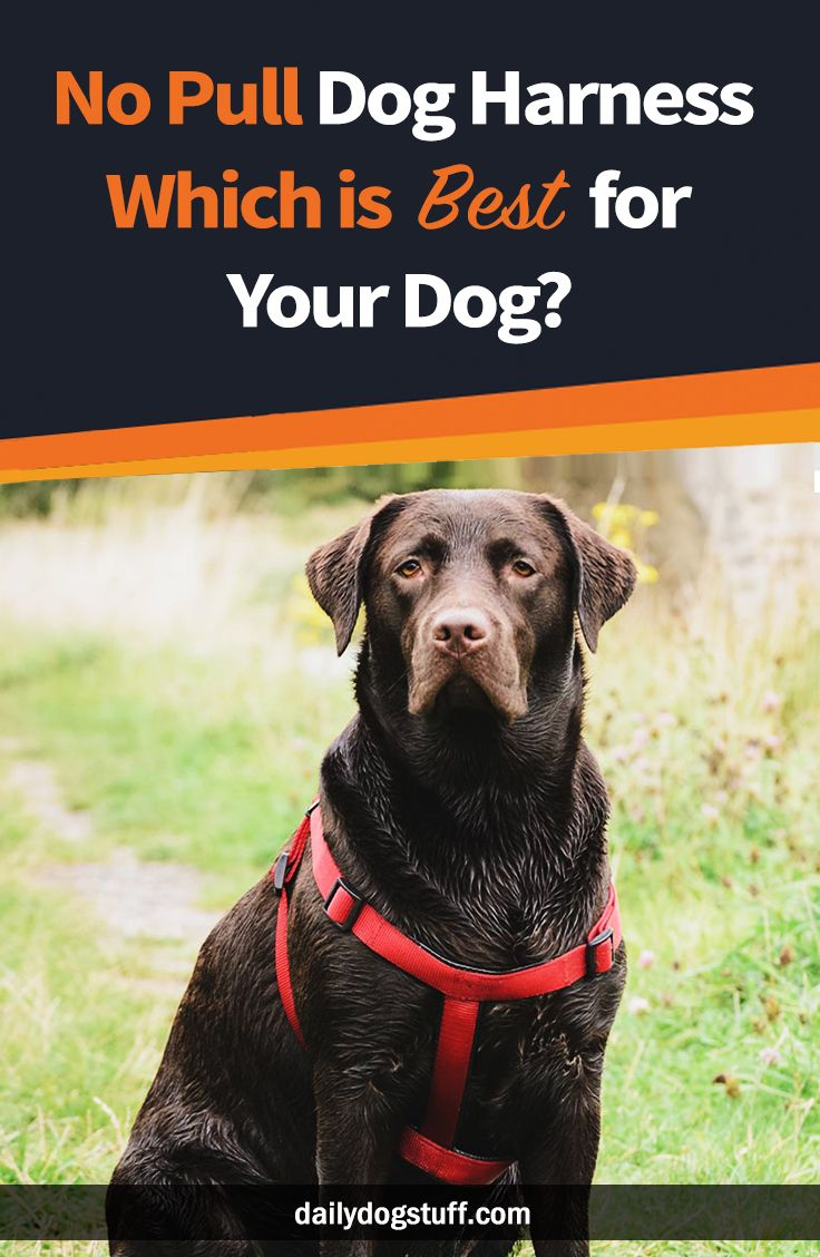 No Pull Dog Harness Which Is Best For Your Dog Daily Dog
