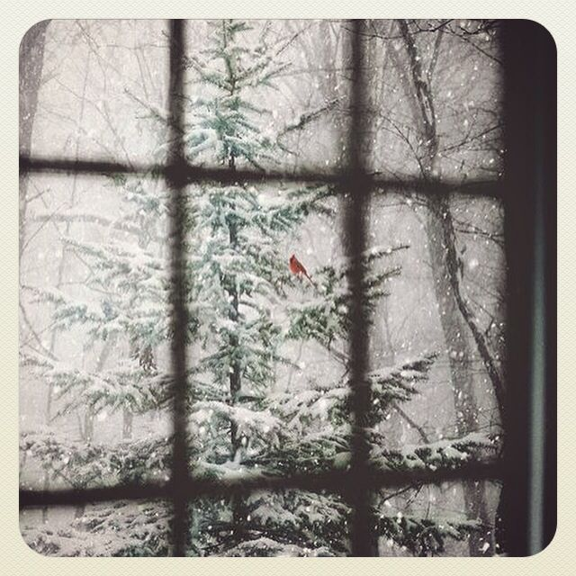 ❄️Let it snow!❄️ #letitsnow #snowychristmas #dreaming #winter #wonderland #cold #snow #white #motd #christmas #happy2015 #klaidrajewelry