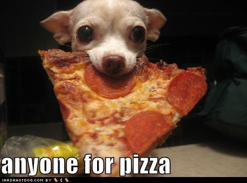 .: Pizza Parties, Animal Pics, Dogs, Late Night Snacks, To Kim, Pet, Funny, Pizza Hut, Pizza Night