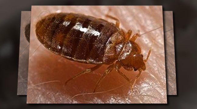 113 best Pest control supplies images on Pinterest