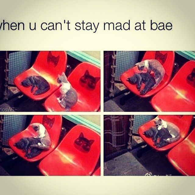 When you cant stay mad at bae love love quotes mad meme love sayings bae cute love