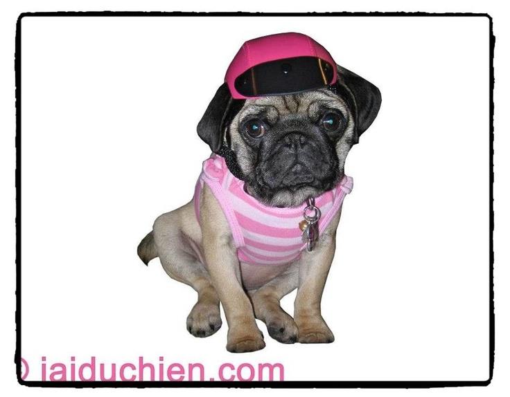 les 25 meilleures id es de la cat gorie casques pour chien sur pinterest casque de v lo l. Black Bedroom Furniture Sets. Home Design Ideas