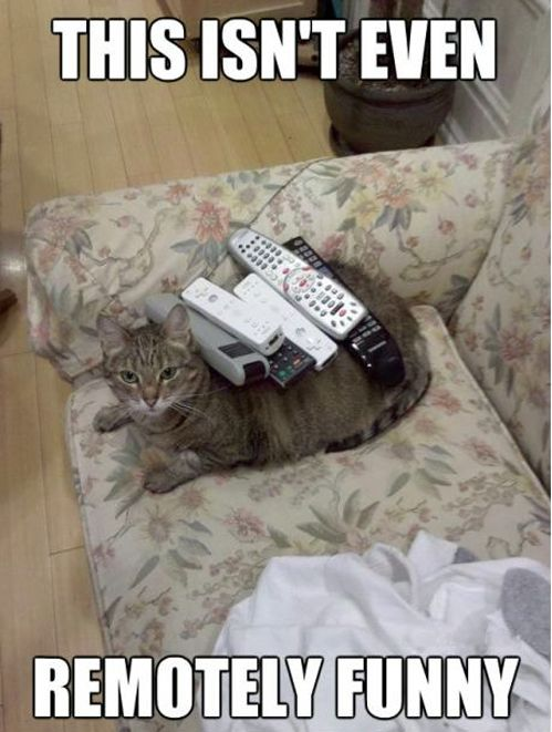 I will never, ever NOT post these.: Books Jackets, Puns, Remote Funny, Funny Pictures, Funny Cat, Funny Stuff, Humor, Animal, Cat Memes
