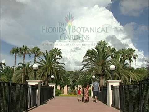 Florida Botanical Gardens | Visit St Petersburg Clearwater Florida