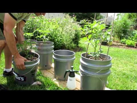 1000 ideas about watering tomatoes on pinterest tomato planter self watering and tomato garden - Self watering container gardening system ...