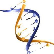 Penjelasan Aplikasi Bioteknologi Modern - http://www.gurupendidikan.com/penjelasan-aplikasi-bioteknologi-modern/