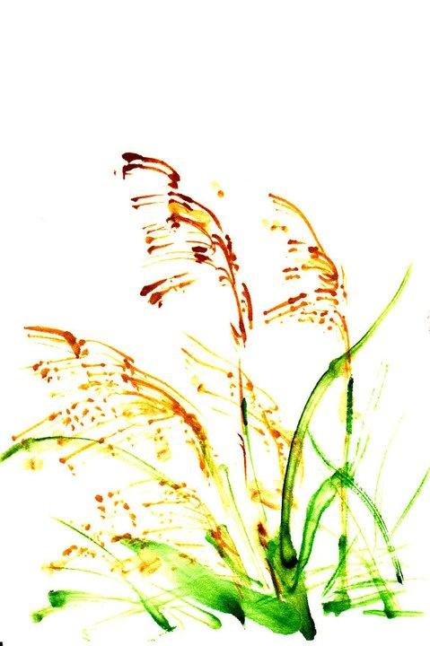 Susuki (Silver Grass)