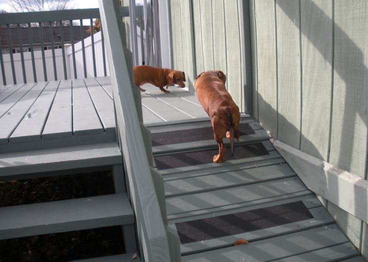 Pet Friendly Home Featuring Dog Ramp From Deck Home Diy